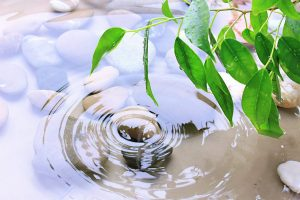 bigstock-Green-leaves-with-reflection-i-488393571