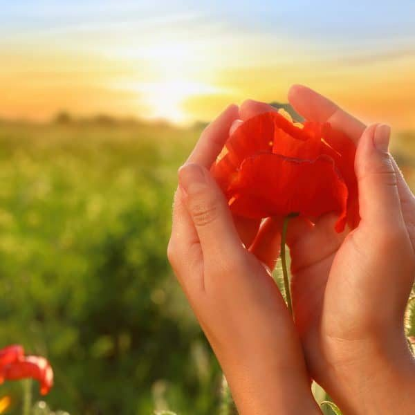 Woman holding red poppy flower in field at sunset, closeup
